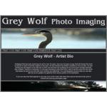 Grey Wolf Photo