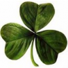 Ireland Web Design logo