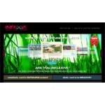Our Online Portfolio