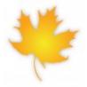 Maple Design Ltd logo
