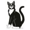 3Cat Design logo