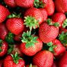 Strawberrysoup logo