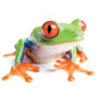 Jamfrog Design logo