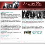 Angrove Stud