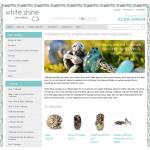 White Shine Jewellery