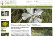 Ragged Robin Wild Flowers
