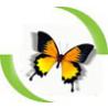 Cheap web design logo