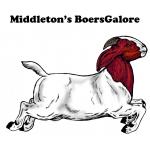 Middleton's BoersGalore
